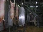 Linije klanja svinja